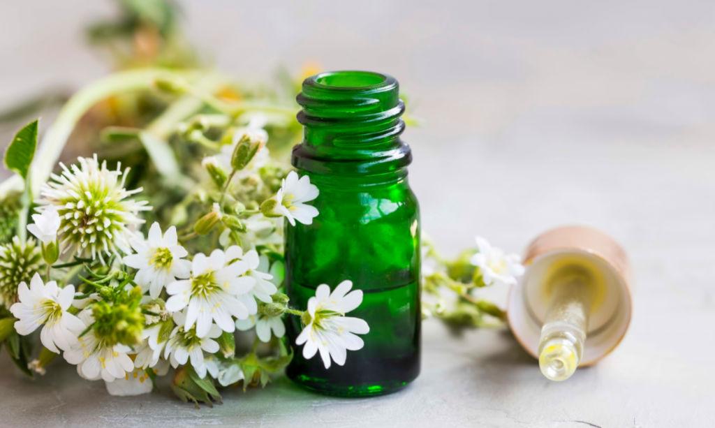 Pflanzliche Mittel und Homöopathie
